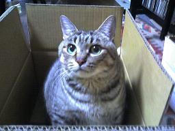 フて猫まる.JPG