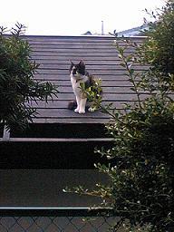 となりの家の猫太郎.JPG
