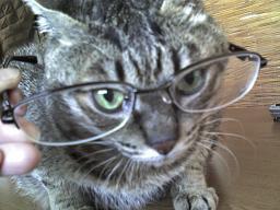賢そうなまる猫.JPG